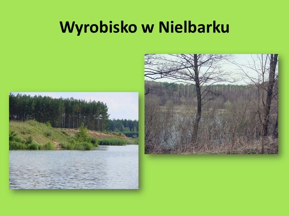 Wyrobisko w Nielbarku