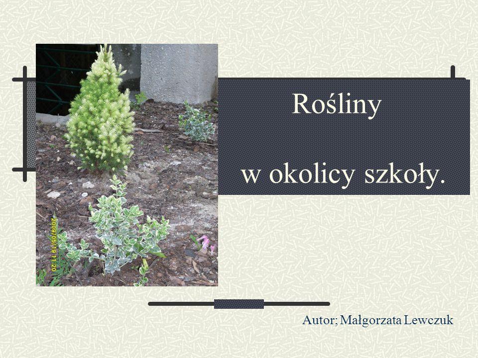 Rośliny w okolicy szkoły.