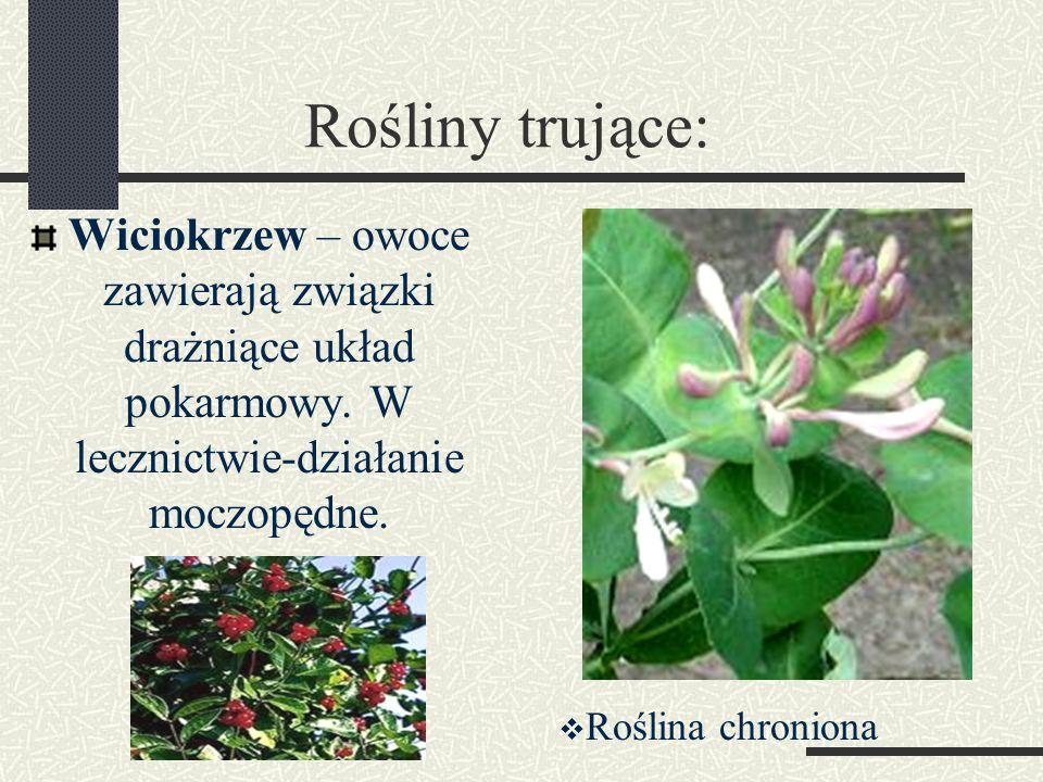Rośliny trujące: Wiciokrzew – owoce zawierają związki drażniące układ pokarmowy. W lecznictwie-działanie moczopędne.