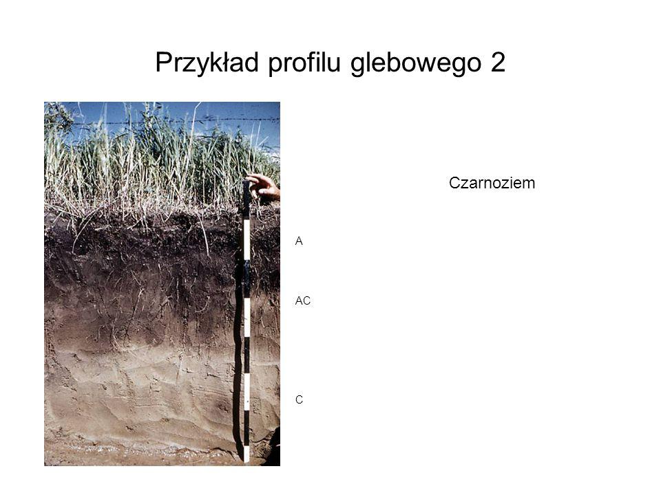 Przykład profilu glebowego 2