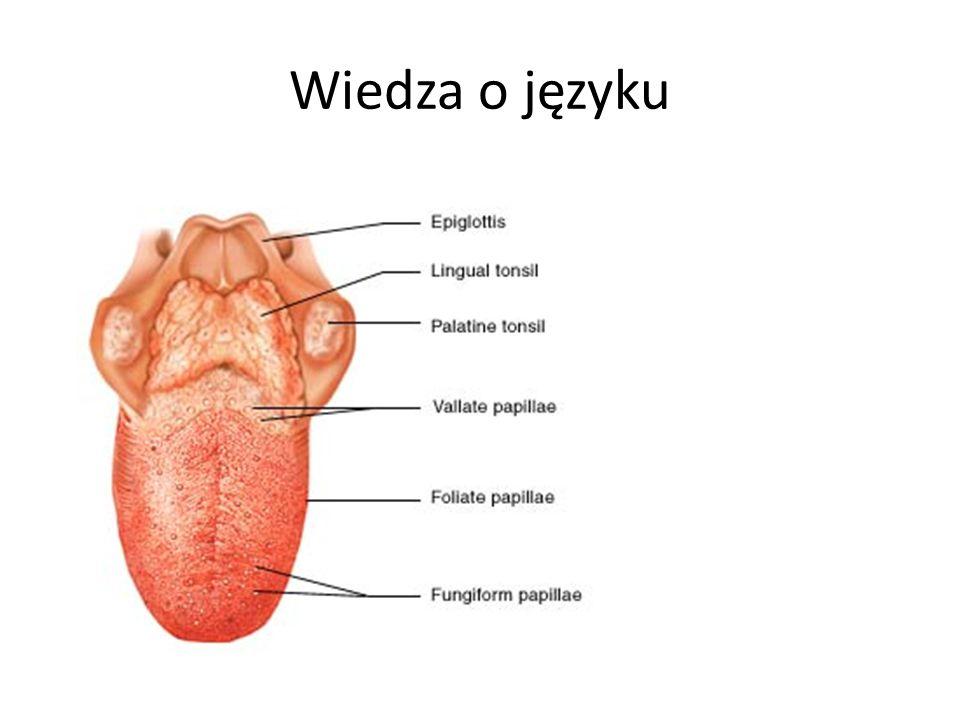 Wiedza o języku