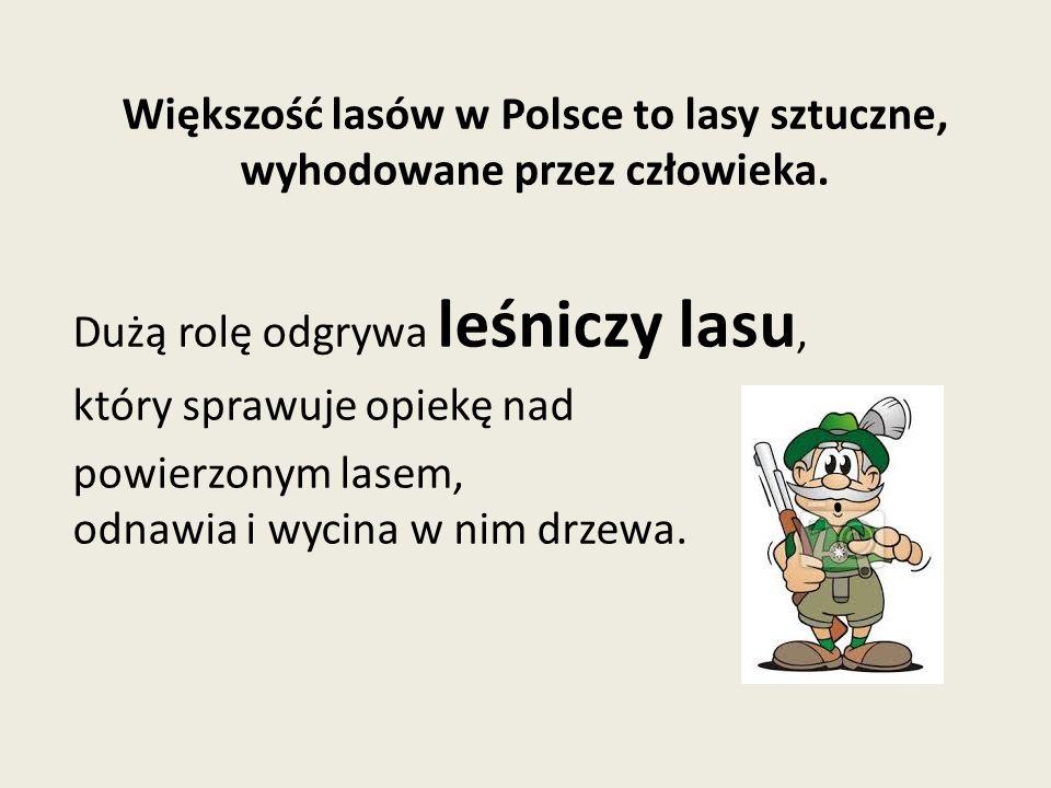 Większość lasów w Polsce to lasy sztuczne, wyhodowane przez człowieka