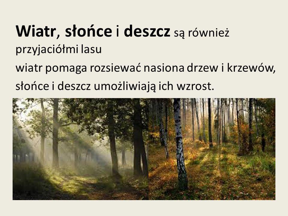 Wiatr, słońce i deszcz są również przyjaciółmi lasu