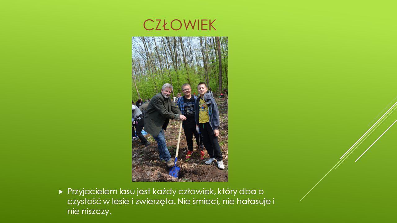 CZŁOWIEK Przyjacielem lasu jest każdy człowiek, który dba o czystość w lesie i zwierzęta.