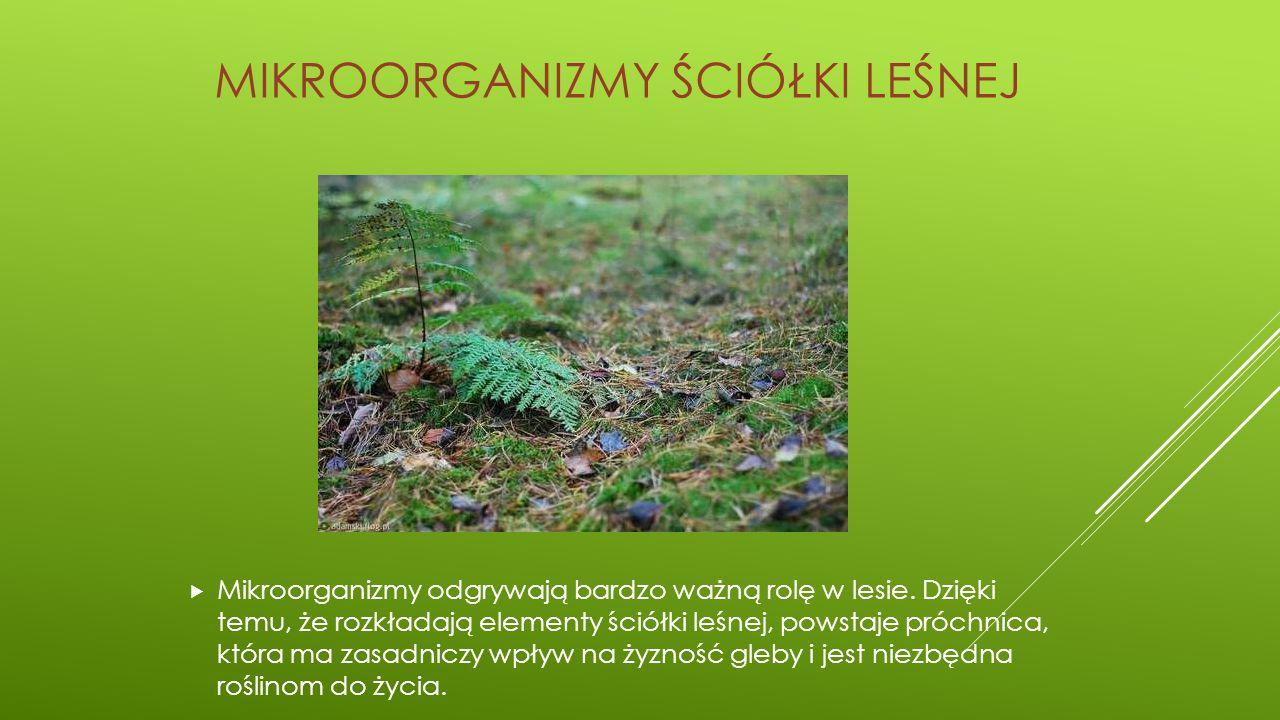Mikroorganizmy ściółki leśnej
