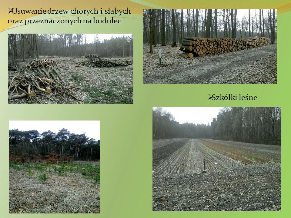 Usuwanie drzew chorych i słabych oraz przeznaczonych na budulec