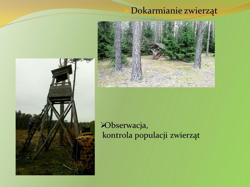 Dokarmianie zwierząt Obserwacja, kontrola populacji zwierząt