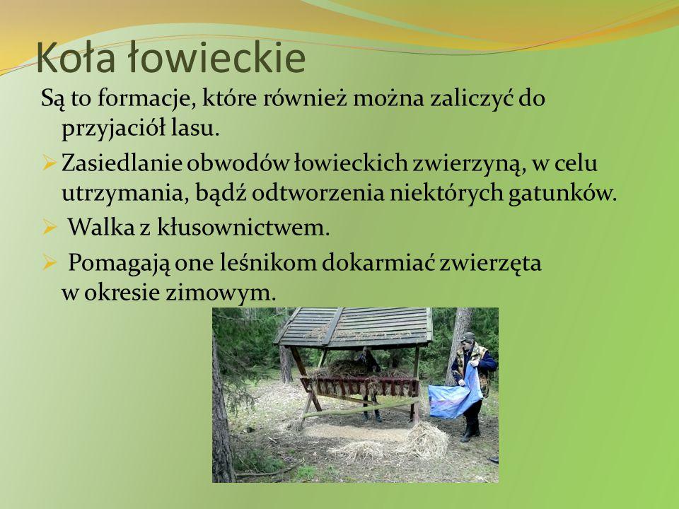 Koła łowieckie Są to formacje, które również można zaliczyć do przyjaciół lasu.