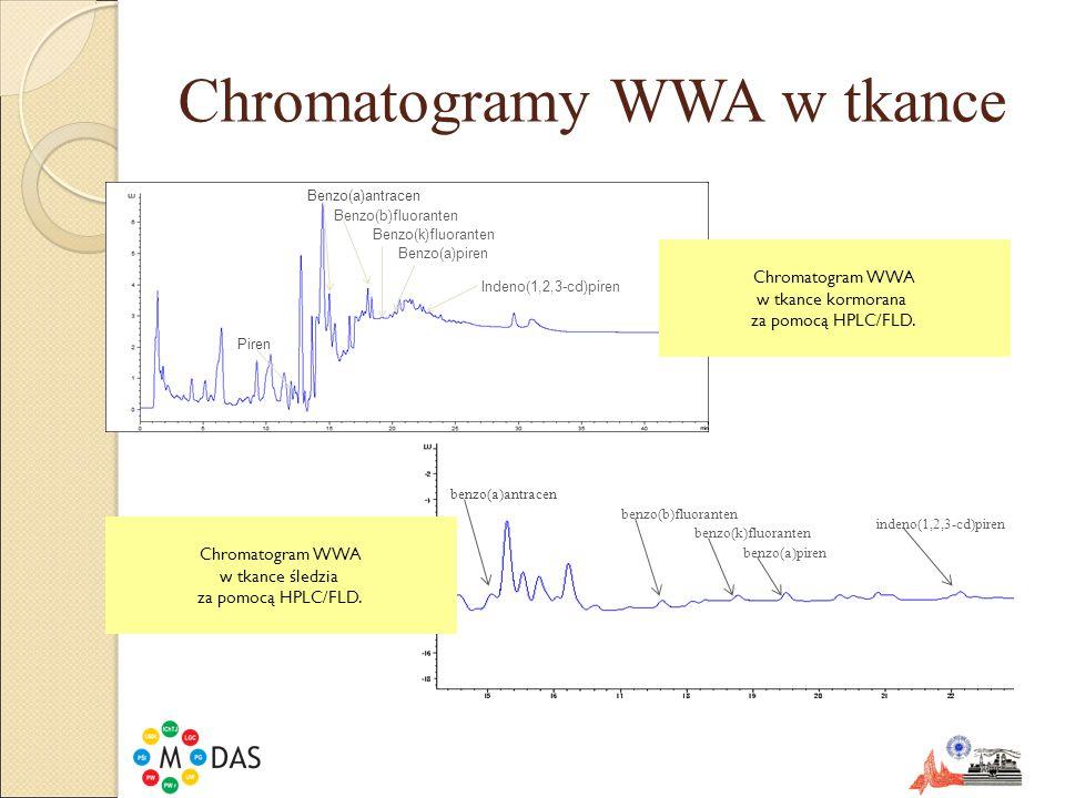 Chromatogramy WWA w tkance