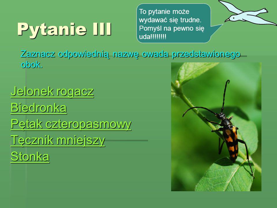Pytanie III Zaznacz odpowiednią nazwę owada przedstawionego obok.