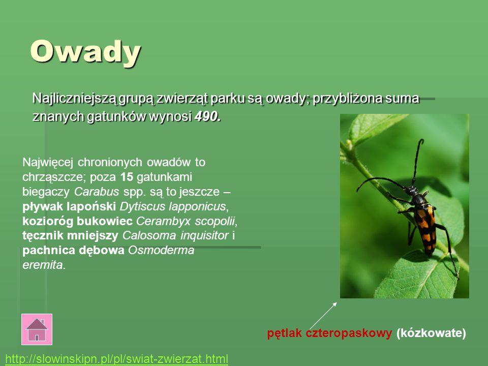 Owady Najliczniejszą grupą zwierząt parku są owady; przybliżona suma znanych gatunków wynosi 490.