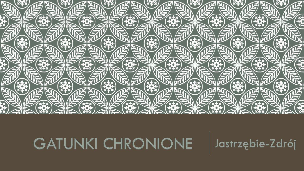 GATUNKI CHRONIONE Jastrzębie-Zdrój