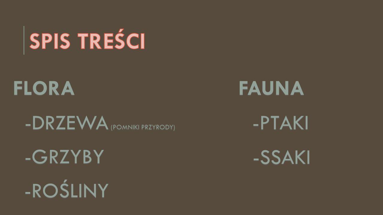 -DRZEWA (POMNIKI PRZYRODY)