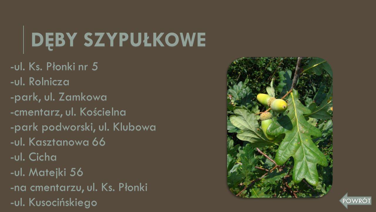 DĘBY SZYPUŁKOWE -ul. Ks. Płonki nr 5 -ul. Rolnicza -park, ul. Zamkowa