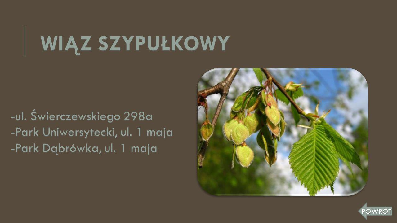 WIĄZ SZYPUŁKOWY -ul. Świerczewskiego 298a