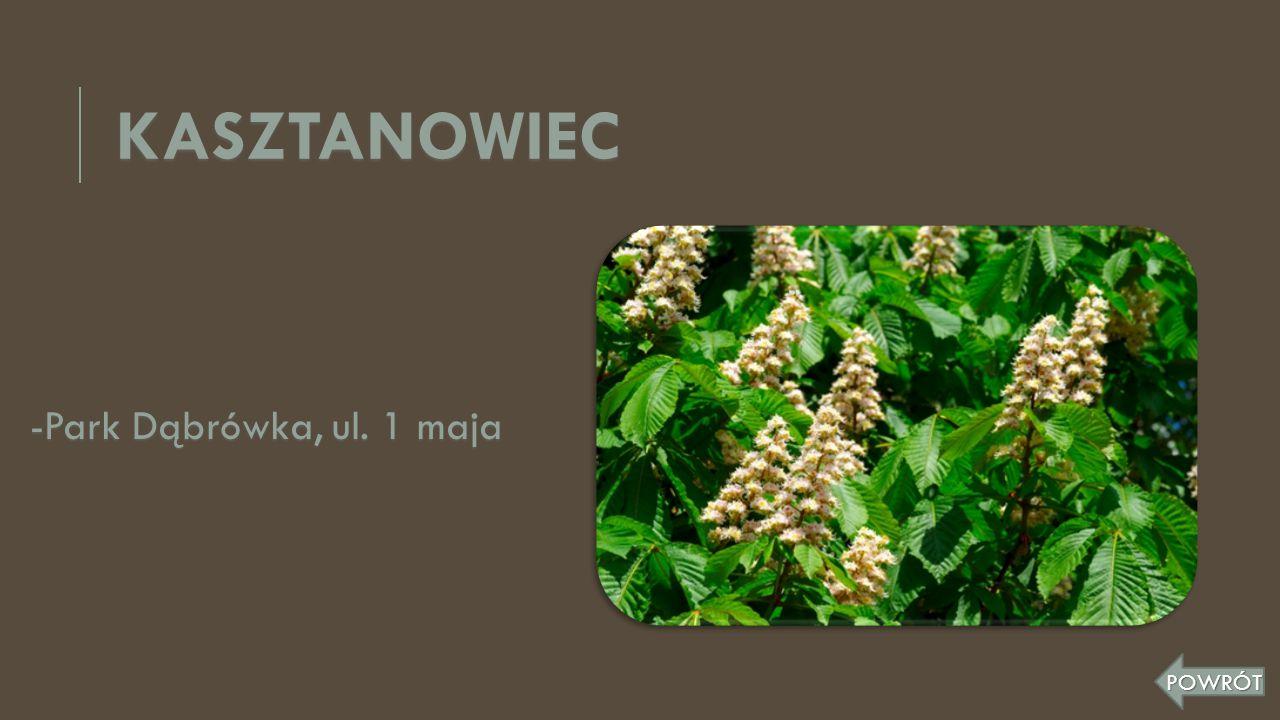 KASZTANOWIEC -Park Dąbrówka, ul. 1 maja POWRÓT