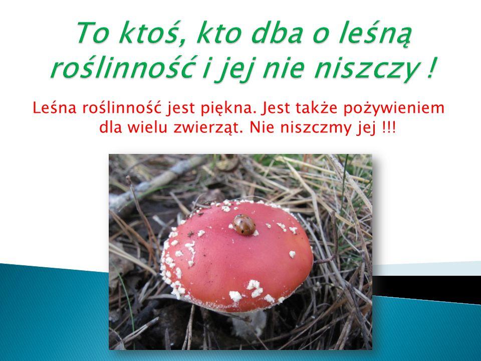 To ktoś, kto dba o leśną roślinność i jej nie niszczy !