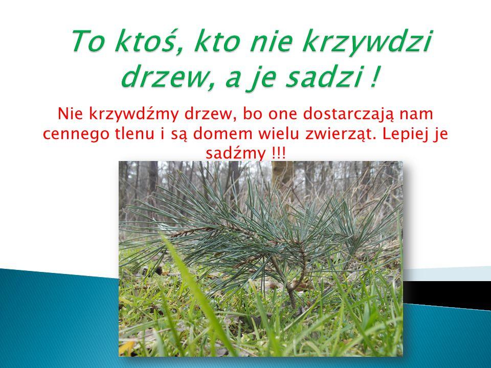 To ktoś, kto nie krzywdzi drzew, a je sadzi !