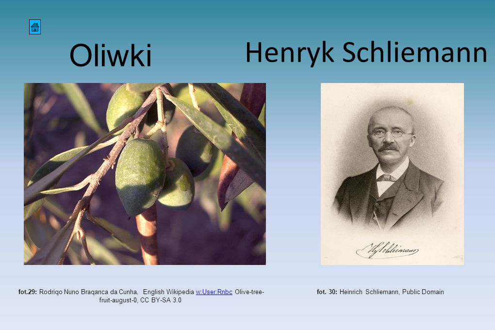 fot. 30: Heinrich Schliemann, Public Domain