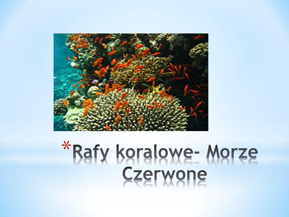 Rafy koralowe- Morze Czerwone