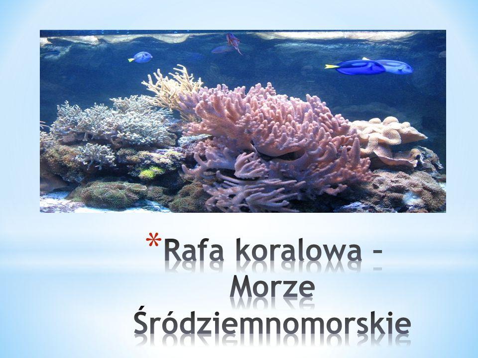 Rafa koralowa – Morze Śródziemnomorskie