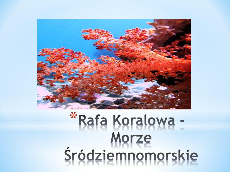 Rafa Koralowa - Morze Śródziemnomorskie