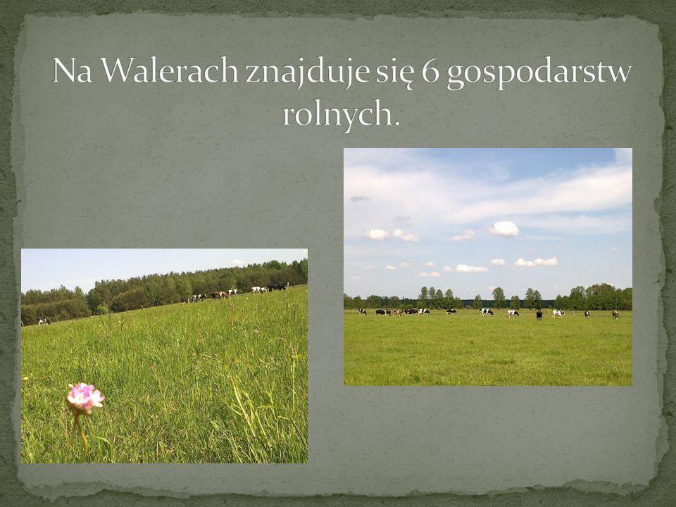 Na Walerach znajduje się 6 gospodarstw rolnych.