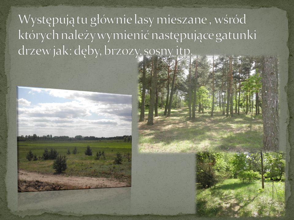 Występują tu głównie lasy mieszane , wśród których należy wymienić następujące gatunki drzew jak: dęby, brzozy, sosny itp.