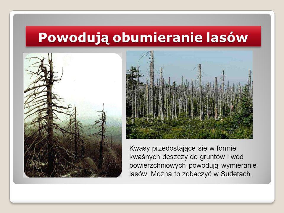 Powodują obumieranie lasów