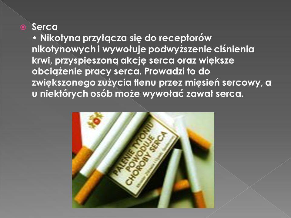 Serca • Nikotyna przyłącza się do receptorów nikotynowych i wywołuje podwyższenie ciśnienia krwi, przyspieszoną akcję serca oraz większe obciążenie pracy serca.
