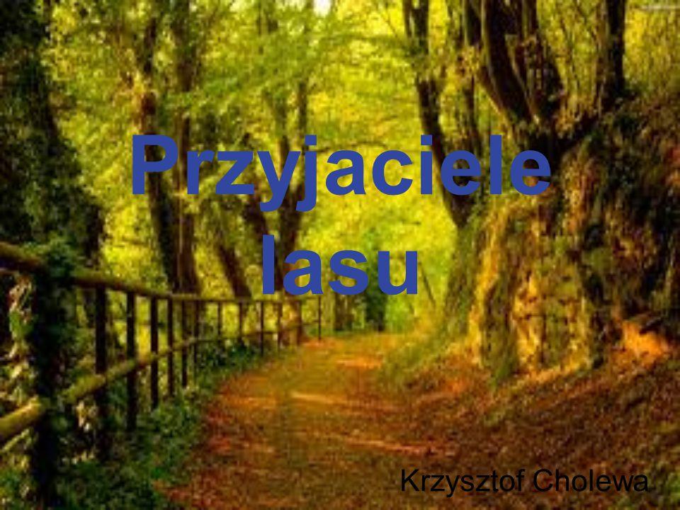 Przyjaciele lasu Krzysztof Cholewa