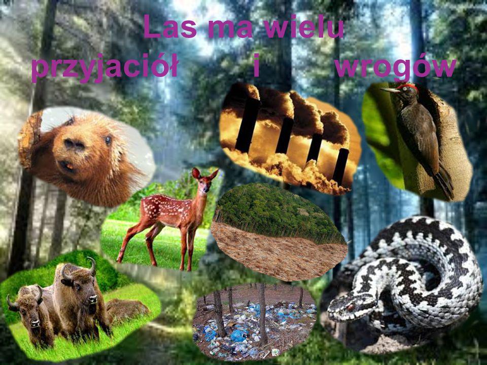 Las ma wielu przyjaciół i wrogów
