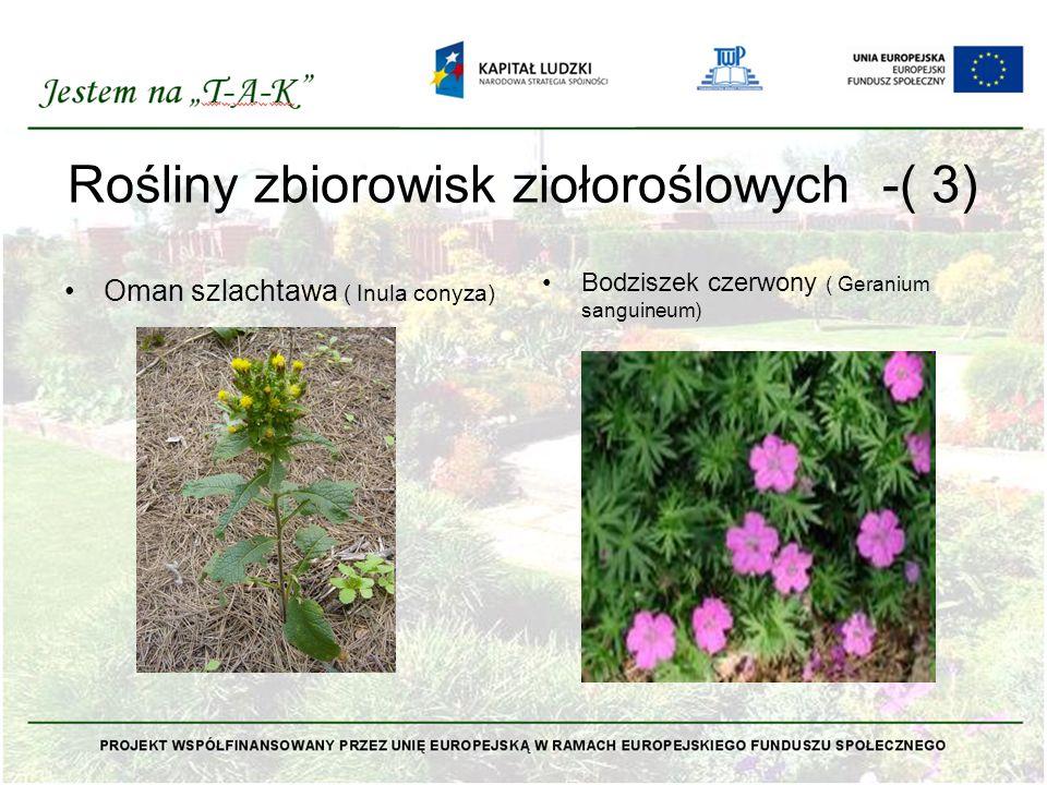 Rośliny zbiorowisk ziołoroślowych -( 3)