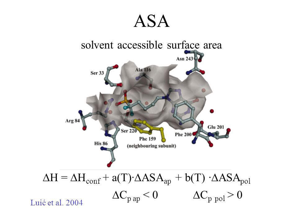 ASA solvent accessible surface area