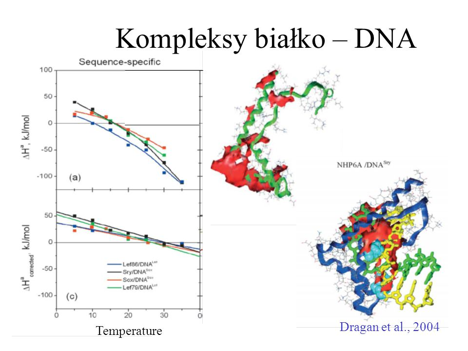 Kompleksy białko – DNA Temperature Dragan et al., 2004