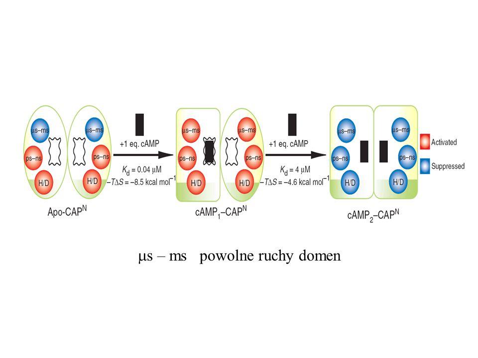 ms – ms powolne ruchy domen