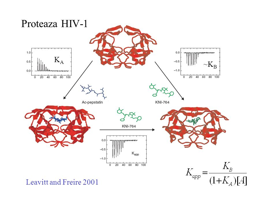 Proteaza HIV-1 KA ~KB Leavitt and Freire 2001