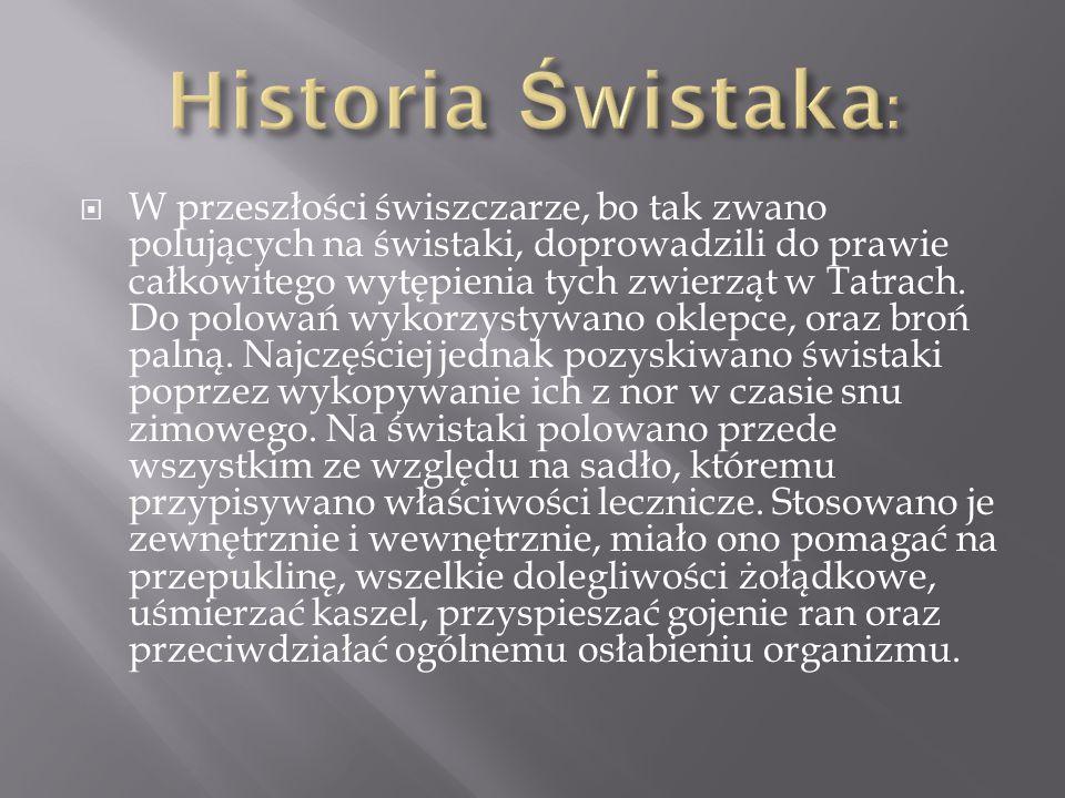 Historia Świstaka: