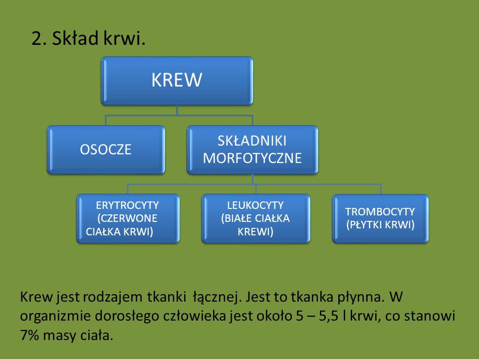 2. Skład krwi. KREW SKŁADNIKI MORFOTYCZNE OSOCZE