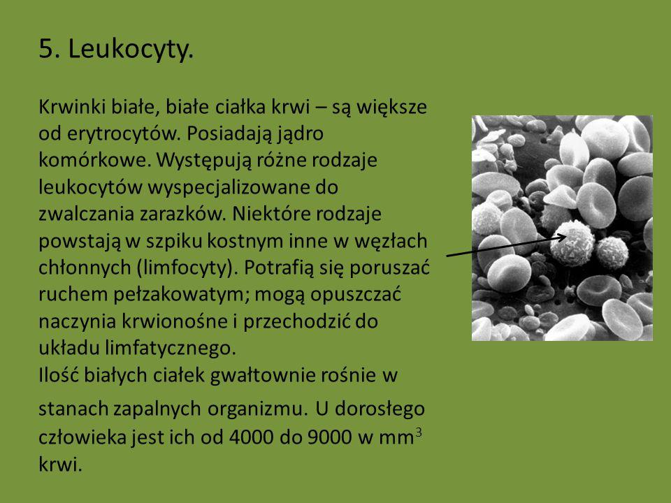 5. Leukocyty.