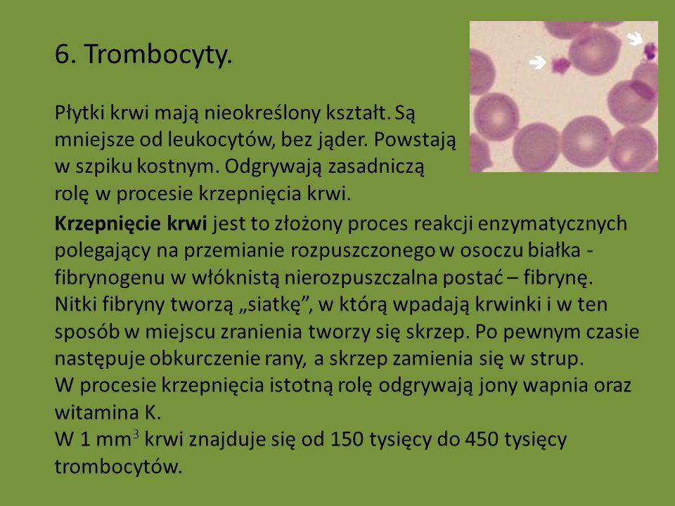 6. Trombocyty.