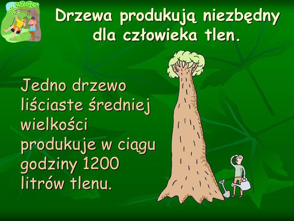 Drzewa produkują niezbędny dla człowieka tlen.