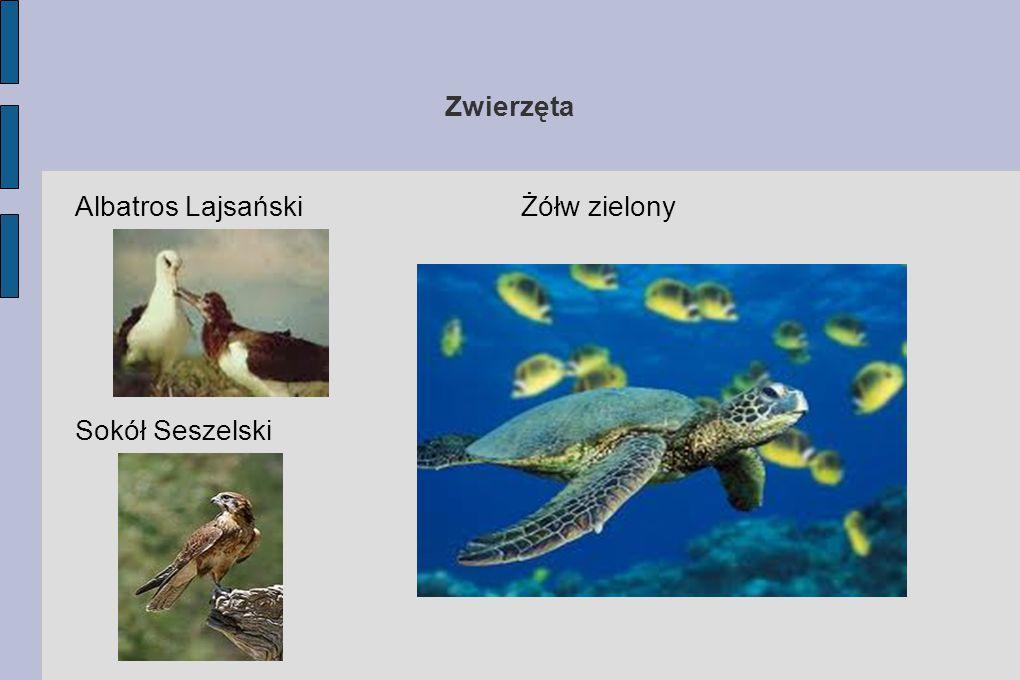 Zwierzęta Albatros Lajsański Żółw zielony Sokół Seszelski