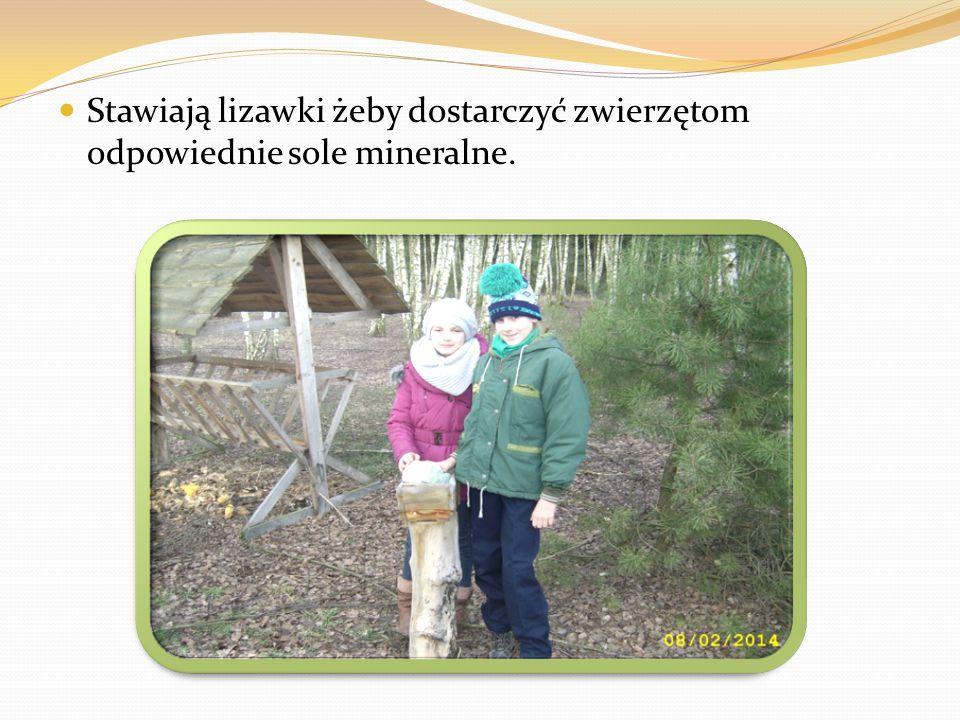 Stawiają lizawki żeby dostarczyć zwierzętom odpowiednie sole mineralne.