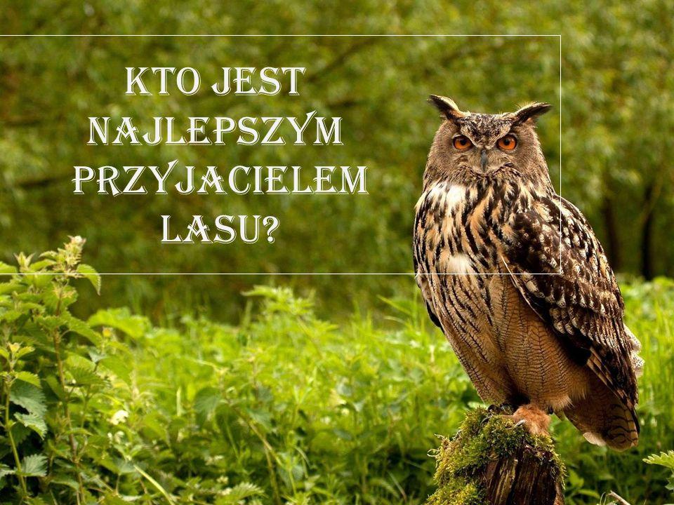 Kto jest najlepszym przyjacielem lasu
