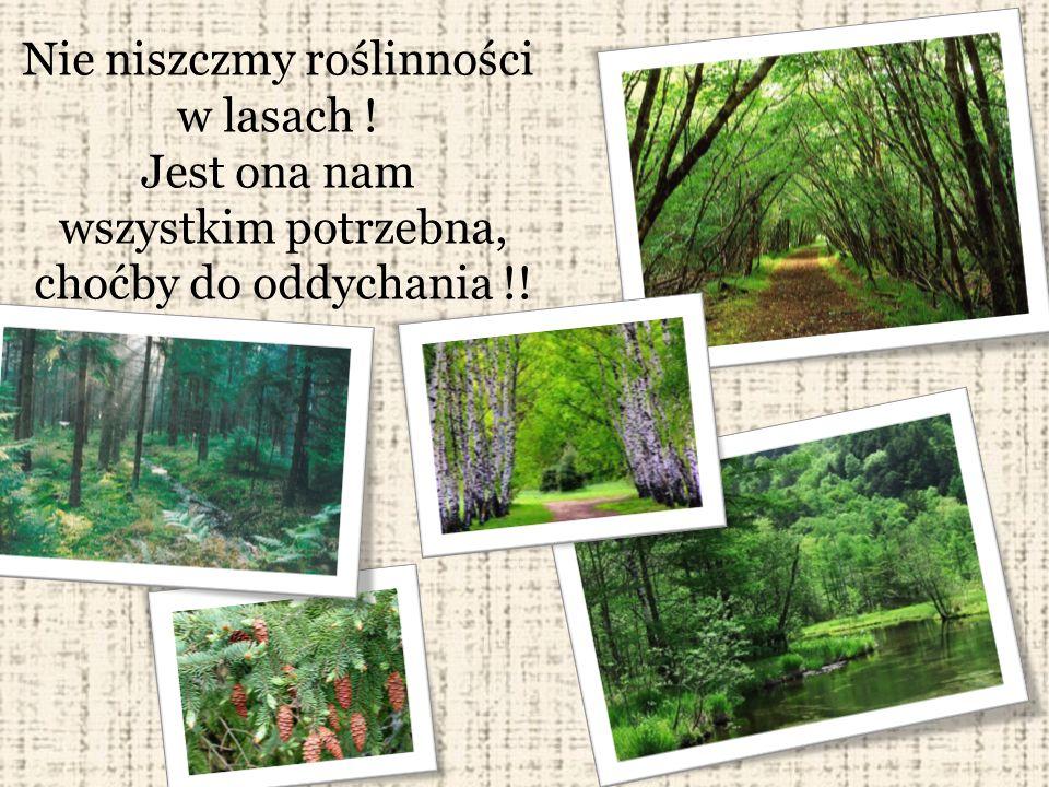 Nie niszczmy roślinności w lasach