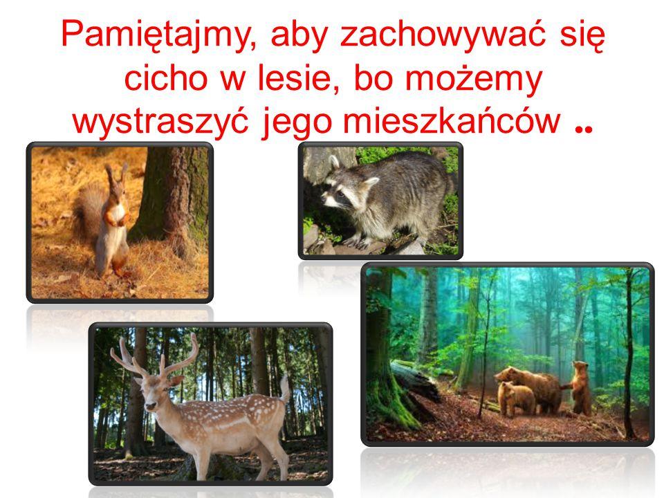 Pamiętajmy, aby zachowywać się cicho w lesie, bo możemy wystraszyć jego mieszkańców ..