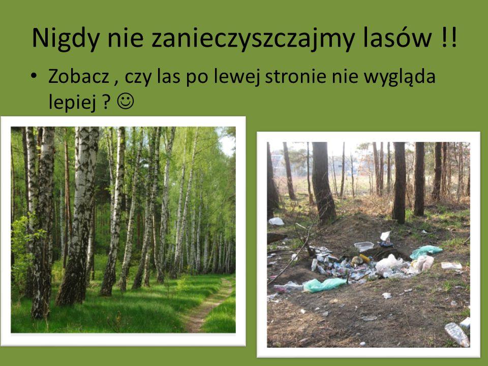 Nigdy nie zanieczyszczajmy lasów !!