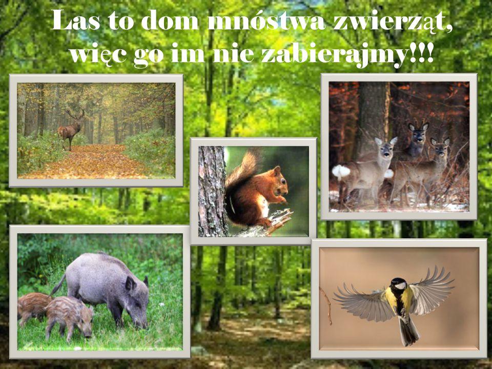 Las to dom mnóstwa zwierząt, więc go im nie zabierajmy!!!