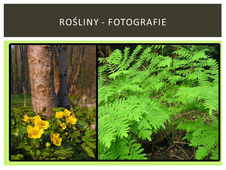Rośliny - fotografie